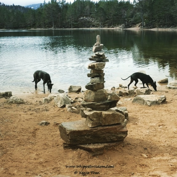 two sighthounds by loch with cairn