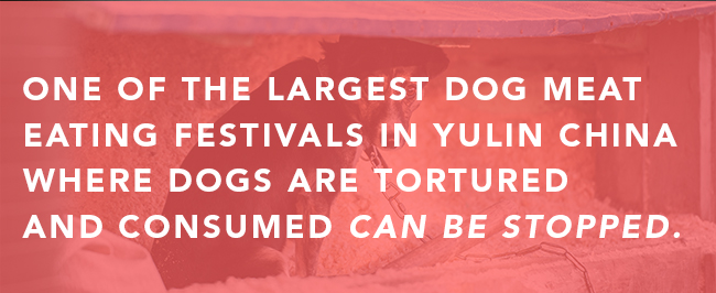 StopYulin_Email_650_DOGS_04