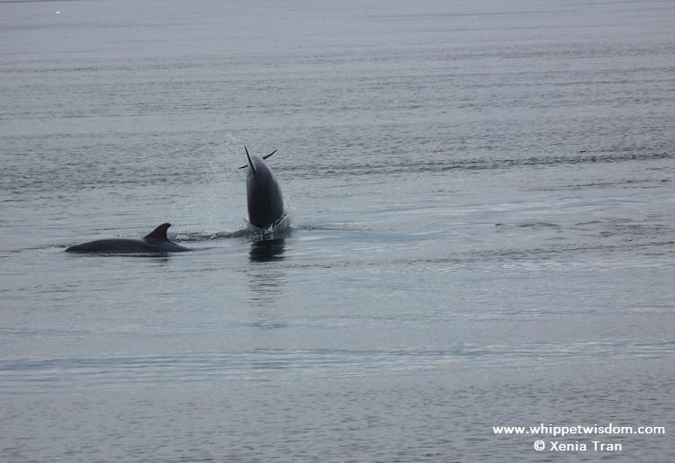 dolphins 1 ww