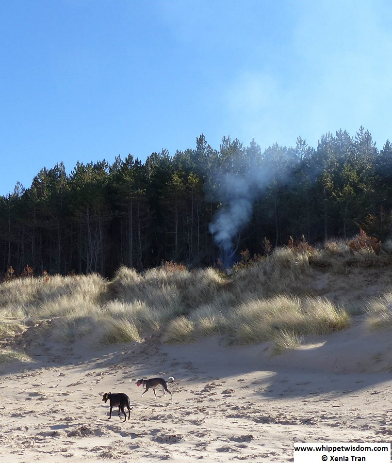 two whippets with balls in their mouths on the beach walking past a barbecue fire in the dunes