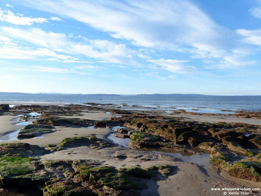 low tide on Moray Firth with rock pools, seaweed and tidal sand