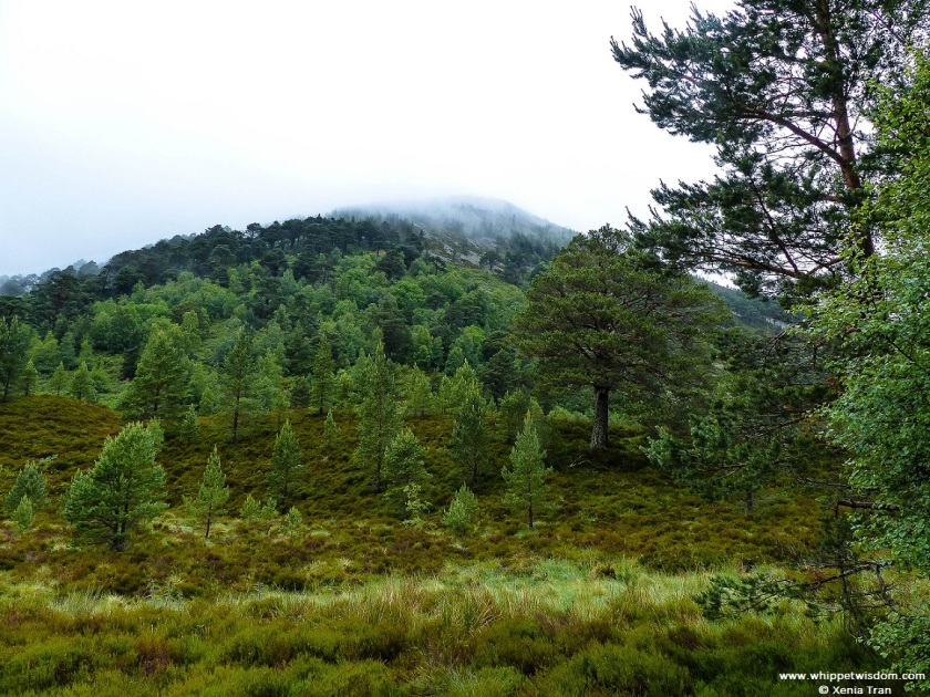 pine trees on a hill shrouded in mist