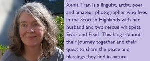 Image and short biography of blog author Xenia Tran