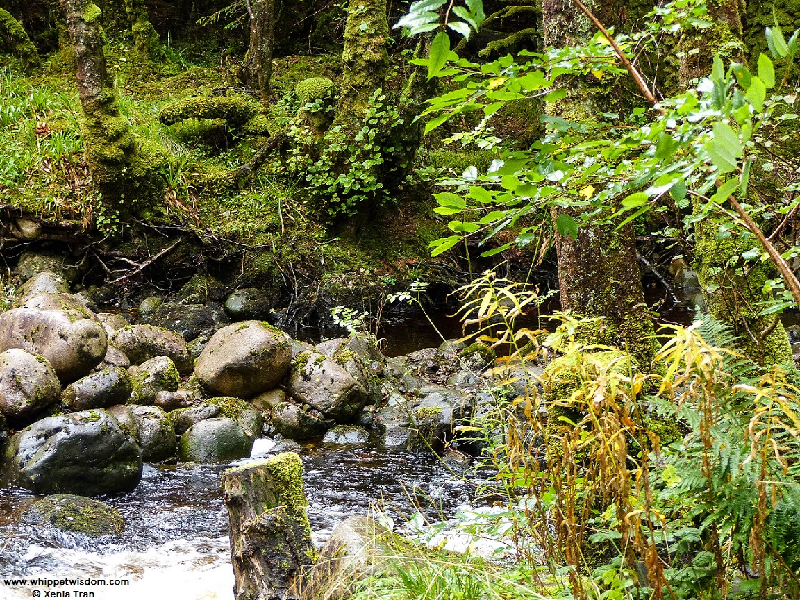 River Lundy flowing through the glen
