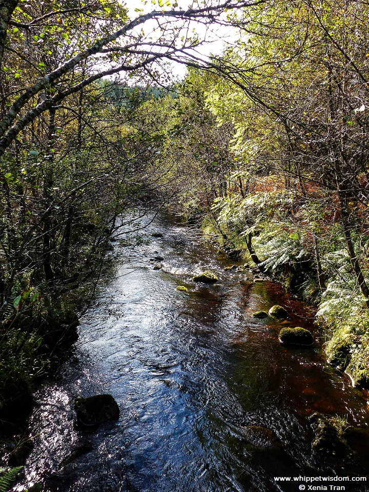 River Lundy seen from a bridge