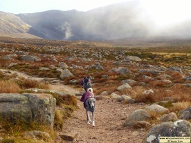 two whippets in winter coats running down a mountain trail in cloud and mist