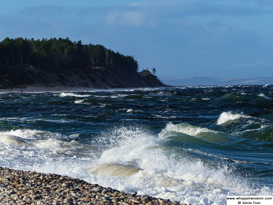 foaming waves on pebble shore at mouth of river Findhorn