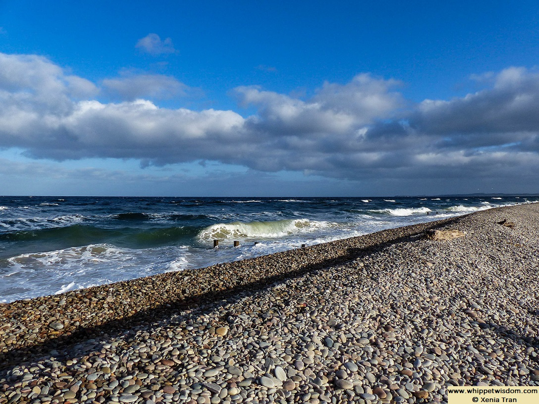 pebbled shore at high tide with rolling waves and blue sky