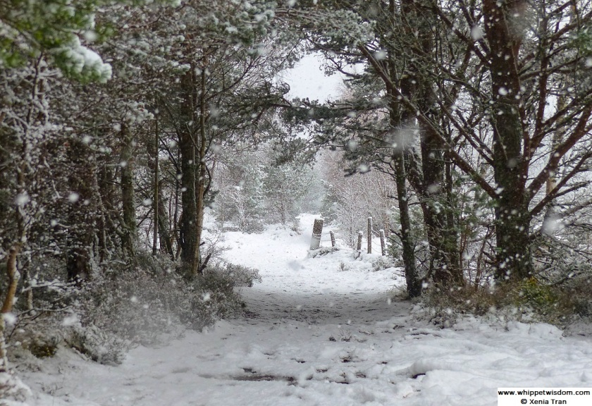 snow falling on a forest trail