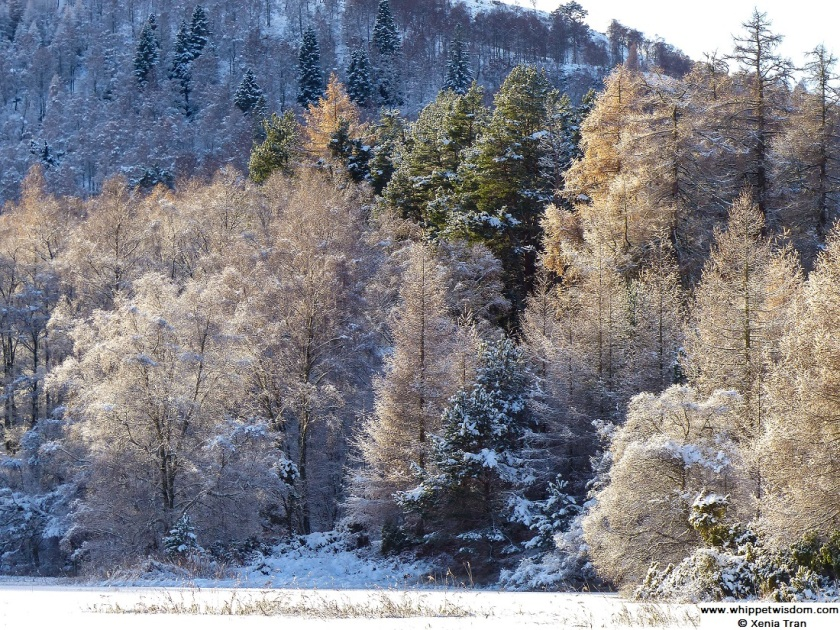 winter trees in Cairngorms National Park