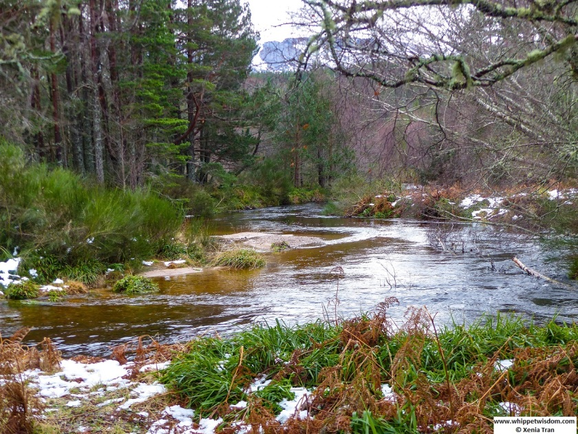 a burn running through the glen with melting snows
