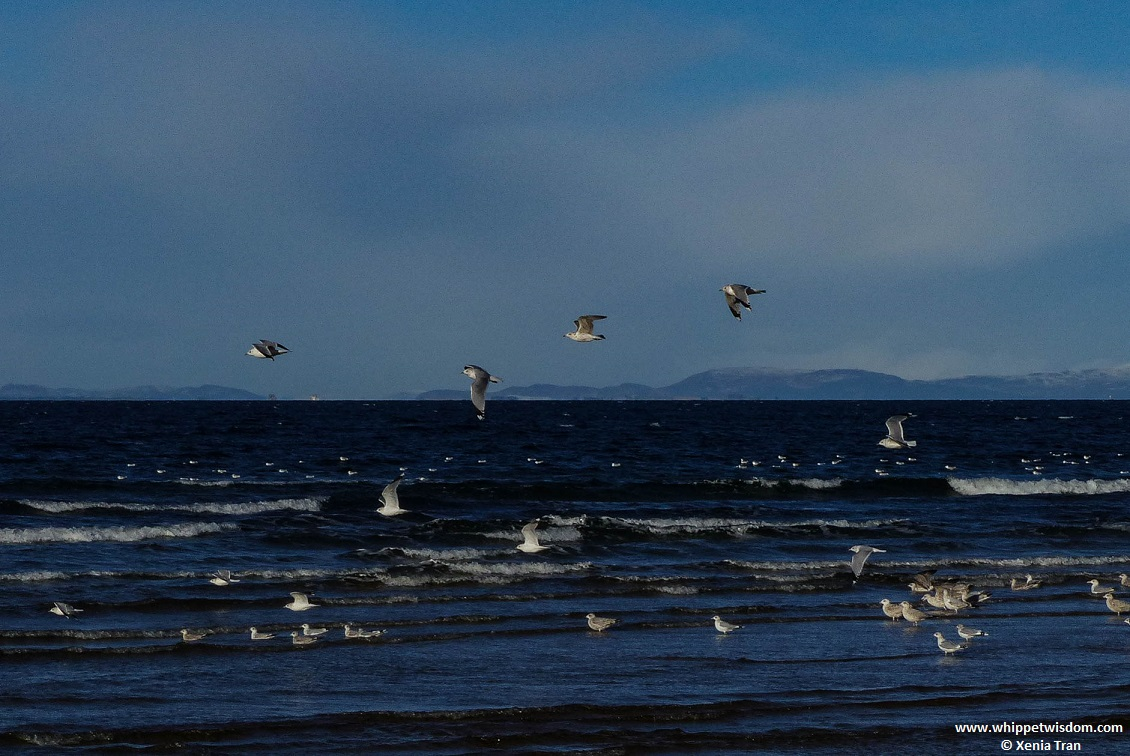seagulls on the water and flying overhead