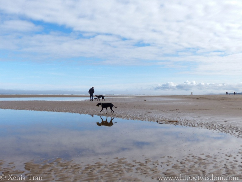 candy floss clouds over beach and tidal pools with people and dogs walking