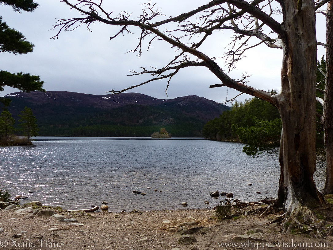 Loch an Eilein in the morning sun