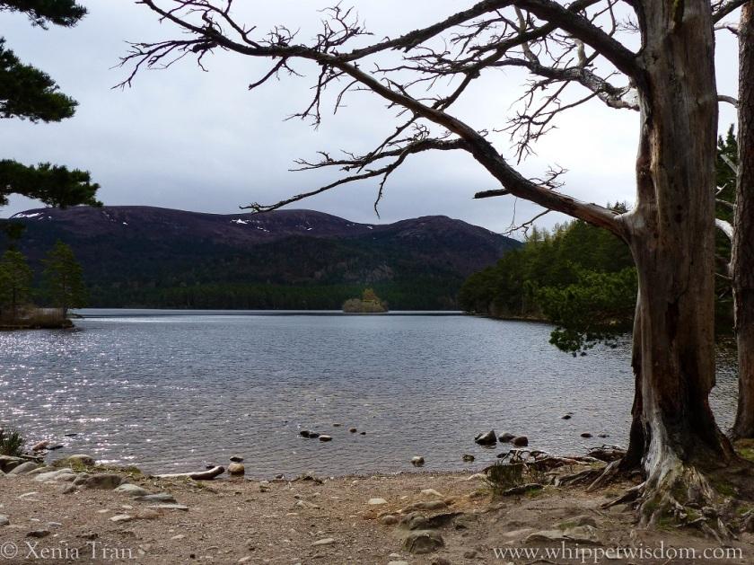 Loch an Eilein in the morning sun