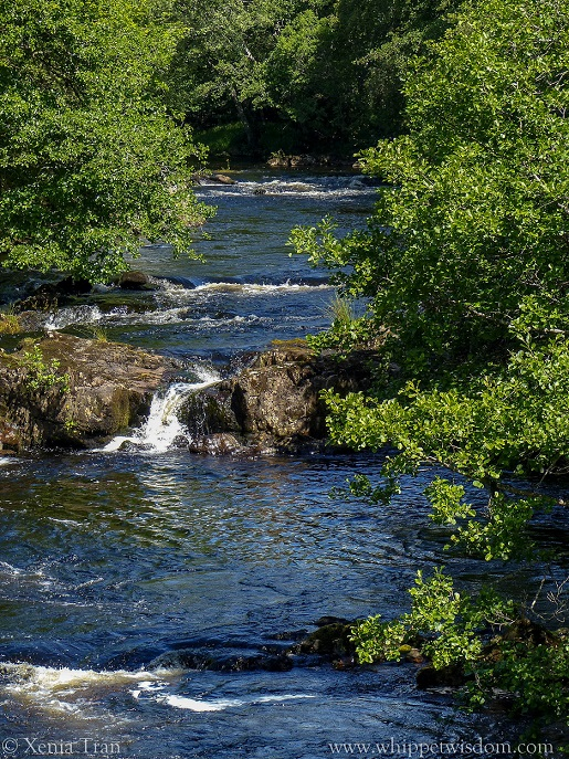 flowing river with four small waterfalls, flanked by aspen in full leaf