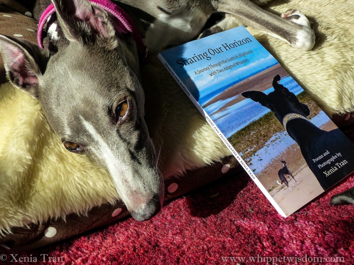 a blue and white whippet with a copy of Sharing Our Horizon