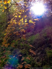 sunlight beaming through the trees in a forest with autumn leaves
