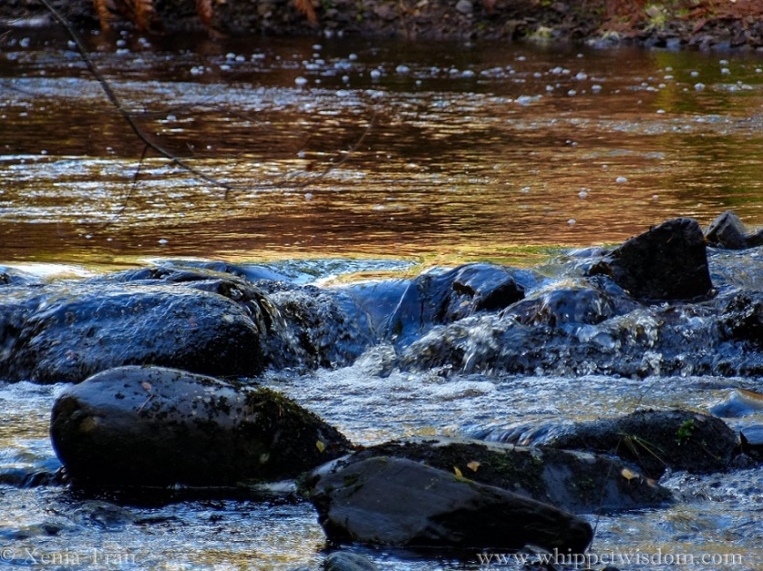close up of water tumbling over large stones in the burn, autumn colours reflected in the water make it look like gold