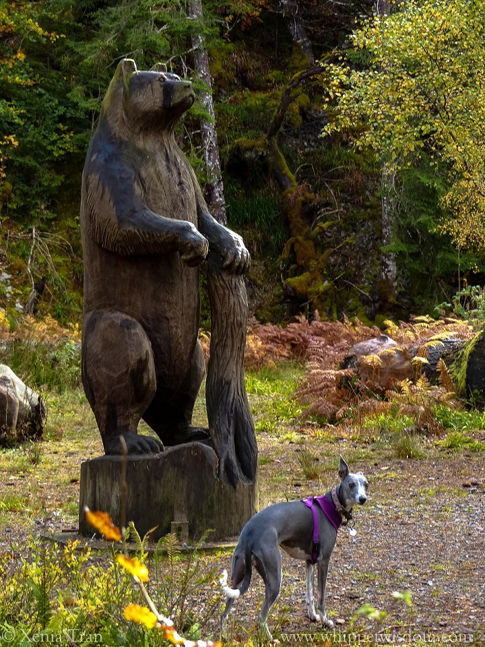 a blue whippet standing by the wooden bear sculpture in Raven's Rock Gorge