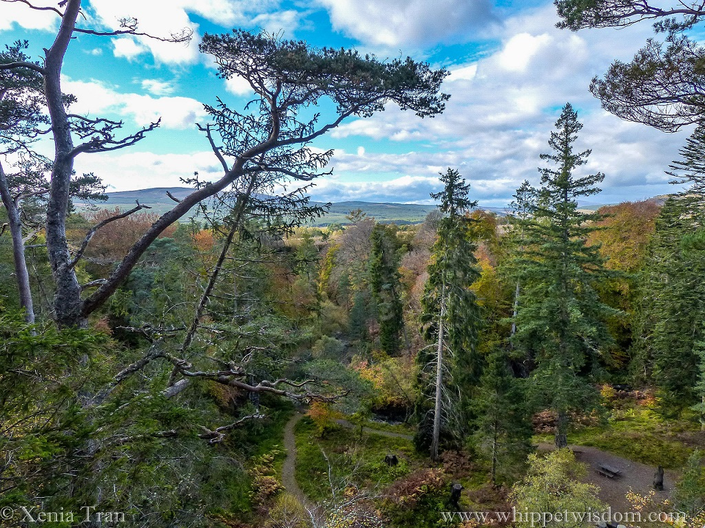 view from the top of Raven's Rock Gorge across the autumn trees towards the mountains