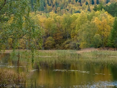 Lochan Mor in autumn colours with fading reeds and lily pads