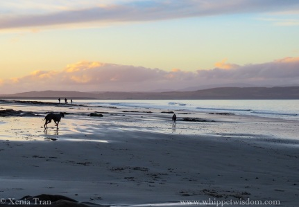 two whippets in winter jackets and three people silhouetted against the setting sun on the shoreline