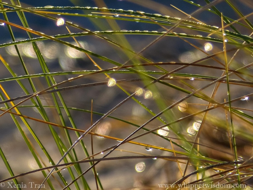 close up shot of melting frost on bent grass, with blurred mandalas in the background