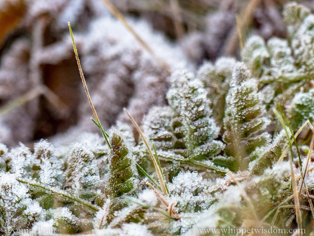 close up shot of frost crystals on ferns and grass