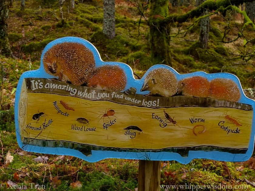 a sign explaining what we can find under logs in Rosehall Forest designed by children