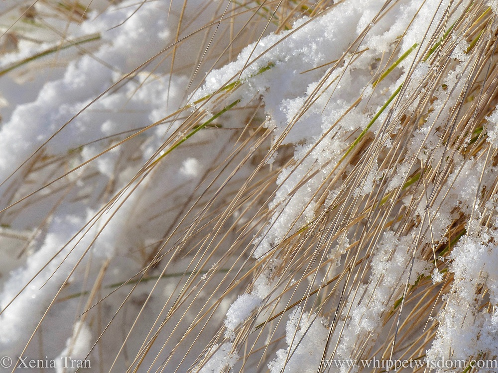 close up shot of snow flakes on bent grass