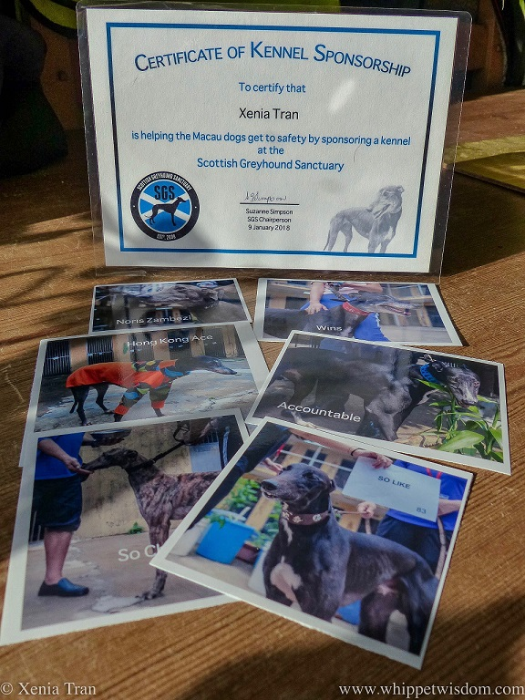 Kennel Sponsorship Certificate for Macau Greyhounds at Scottish Greyhound Sanctuary