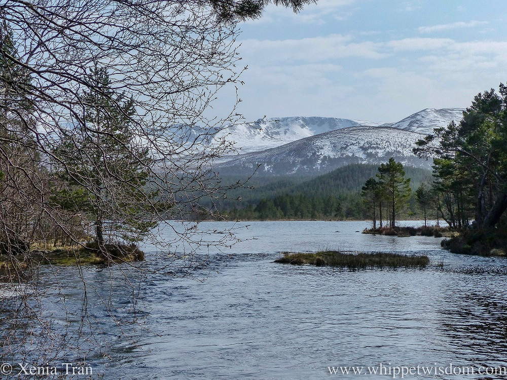 view across Loch Morlich from the west shore towards the snow-capped mountains