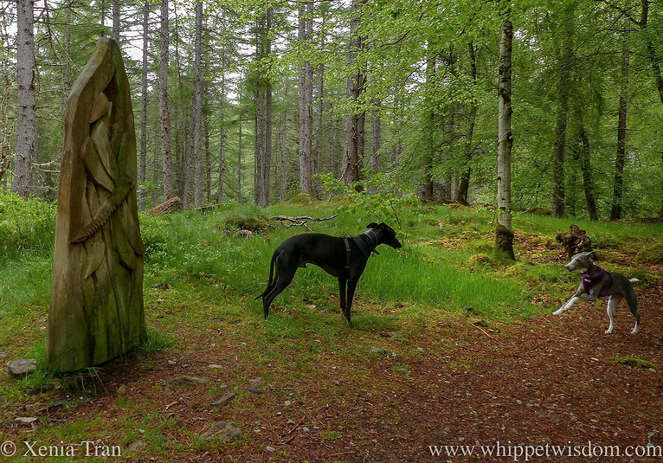 a black whippet and a blue and white whippet on a forest trail beside a wooden dragonfly sculpture