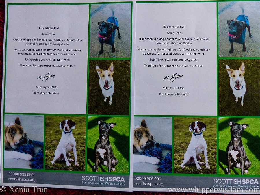 photograph of two kennel sponsorship certificates from the SSPCA