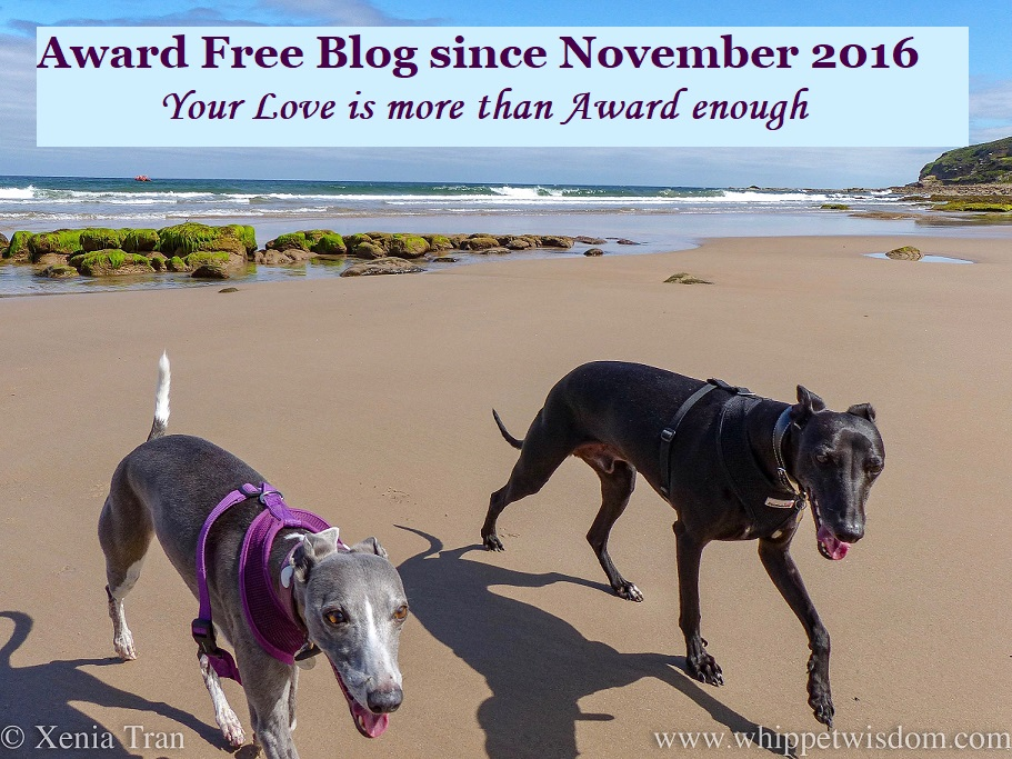 Award Free badge featuring a smiling blue and white whippet and a smiling black whippet on the beach