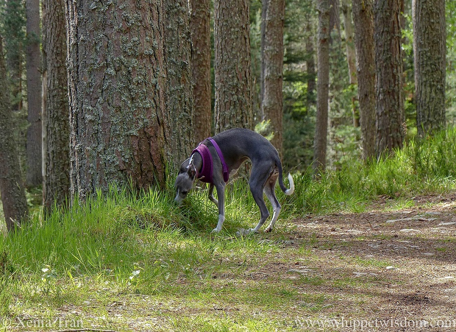 Wordless Wednesday: Back Among Trees