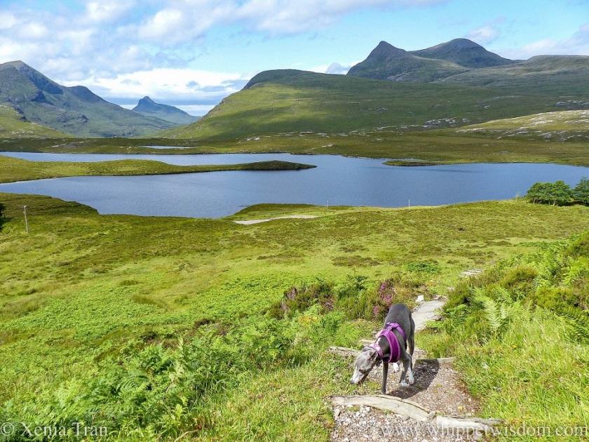 a blue and white whippet climbing up a crag above Lochan an Ais