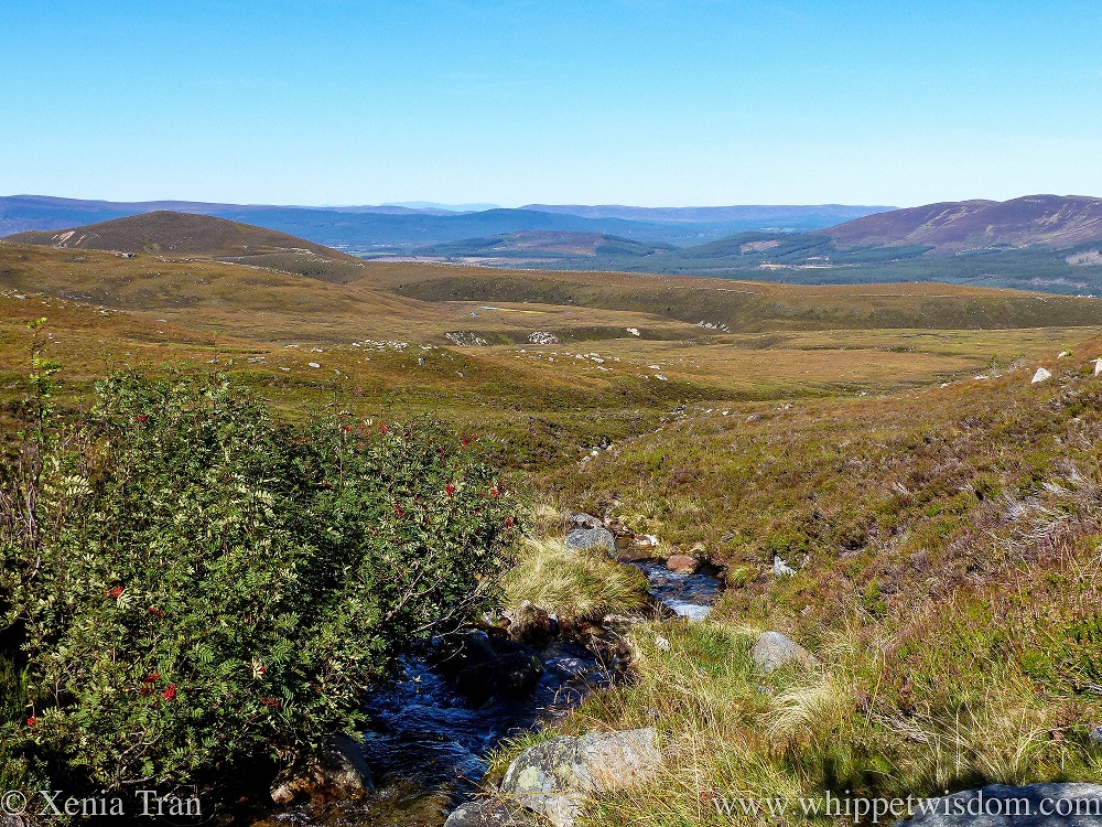 a gurgling stream running down the mountain plateaus in the Cairngorms