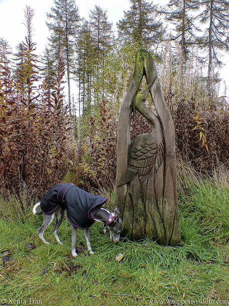 a whippet in a jacket beside a wooden heron sculpture in autumn woods