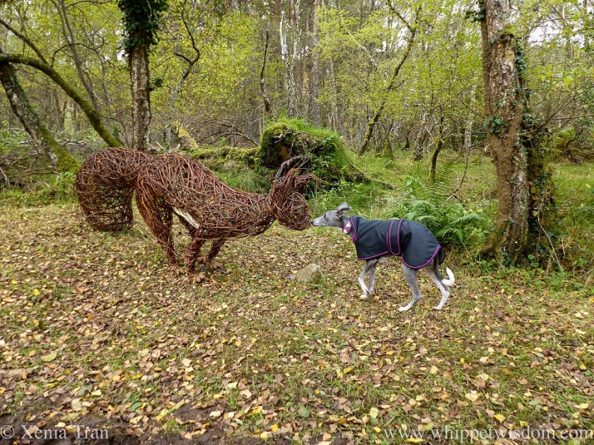 a blue and white whippet in a black jacket touches a giant squirrel sculpture's nose with her nose