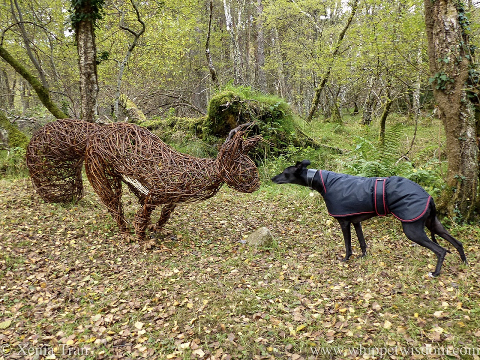 a black whippet in a jacket tentatively greeting a giant squirrel sculpture