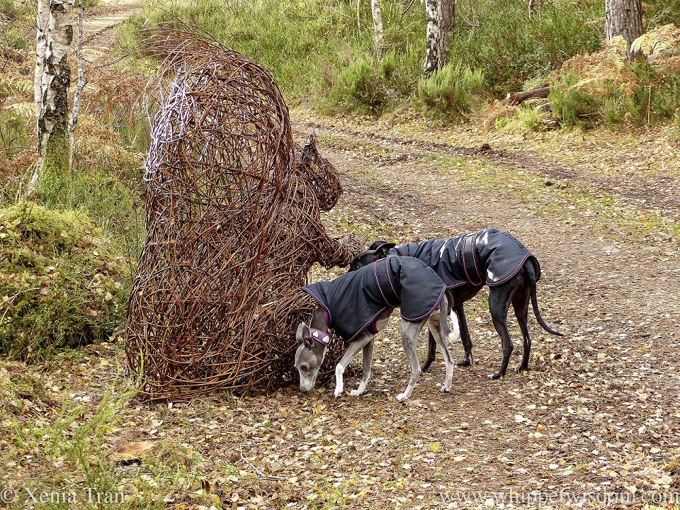 a blue and white whippet and a black whippet sniffing a wicker squirrel sculpture
