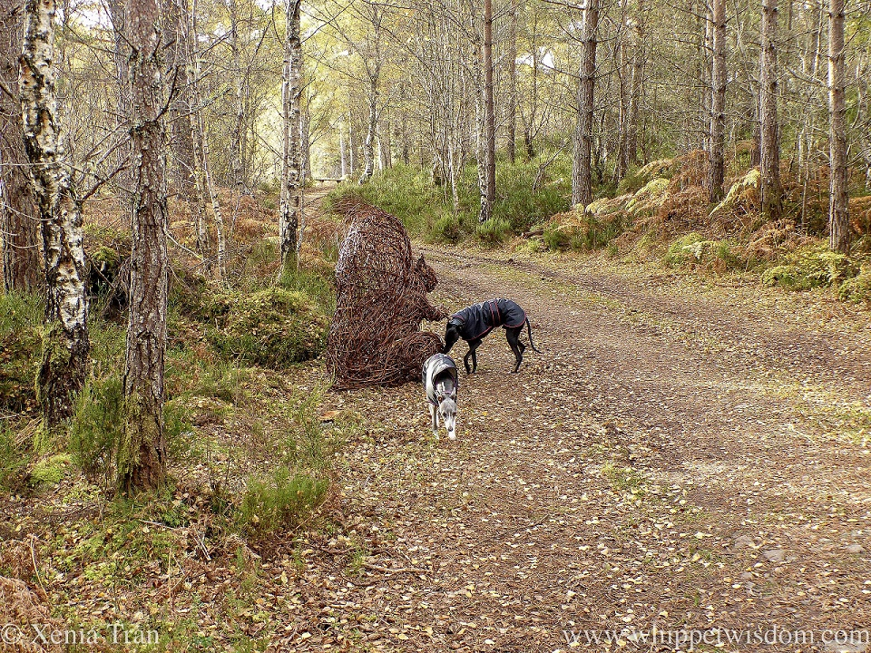 a blue and white whippet and a black whippet on a forest trail beside a squirrel sculpture