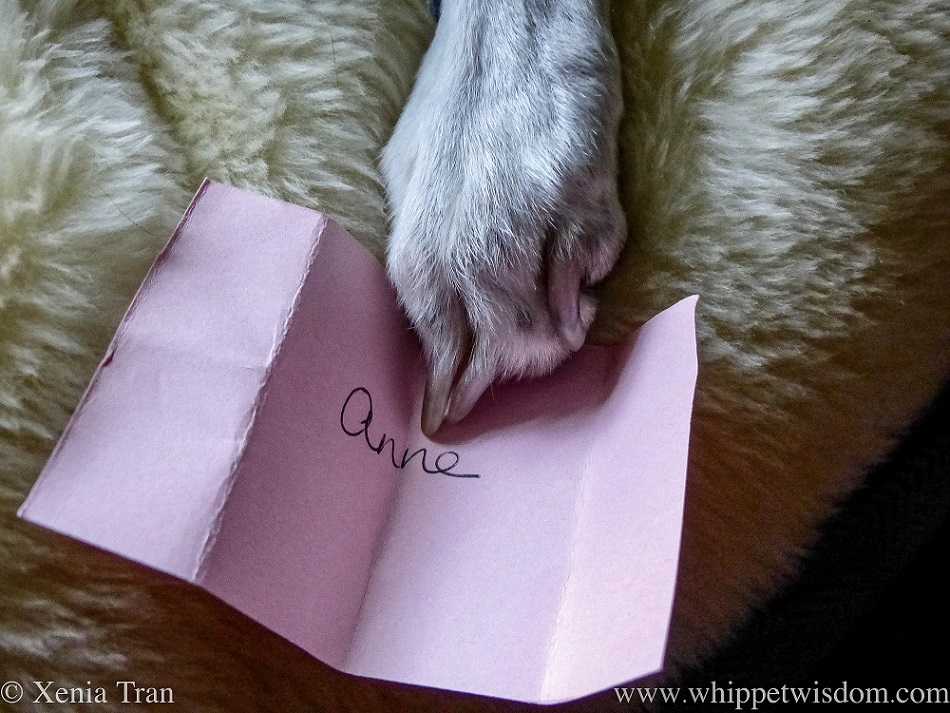 a white dog's paw holding a pink card with 'Anne' written on