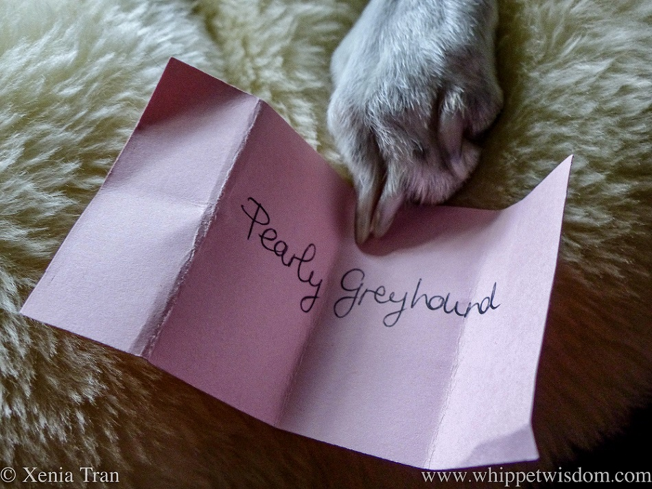 a white dog's paw holding a pink card with 'Pearly Greyhound' written on