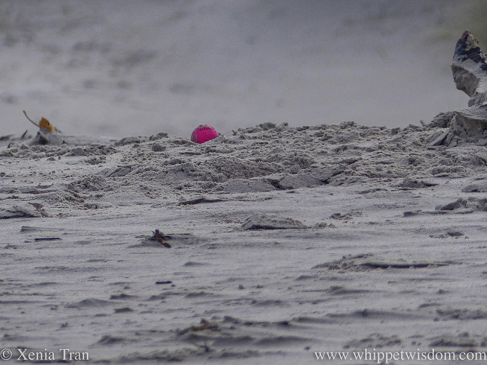 a bright pink ball resting in the sand on the beach