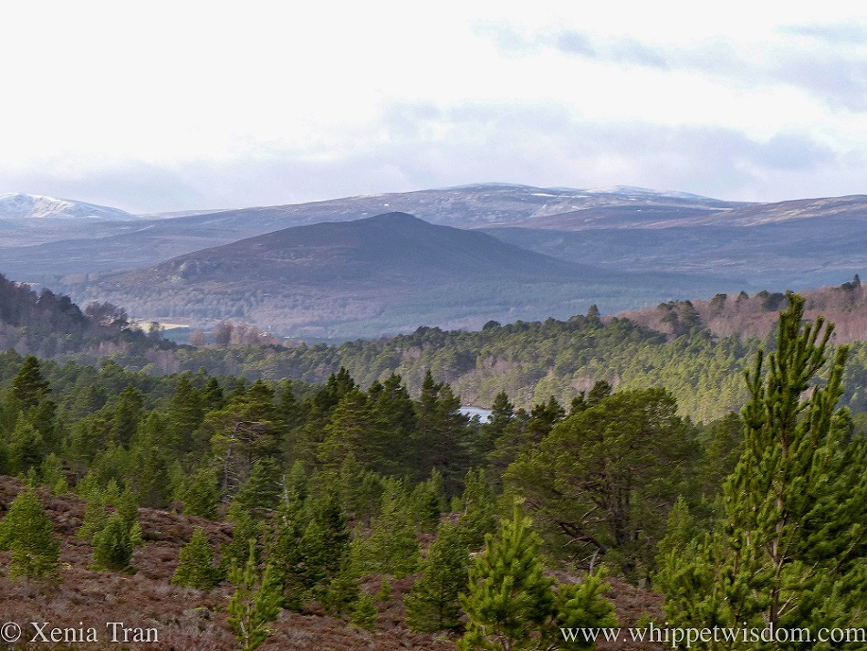 view across the hills and mountains with pine trees and a small loch below