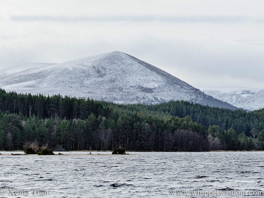 snow covered mountains towering above the pine forest by Loch Morlich
