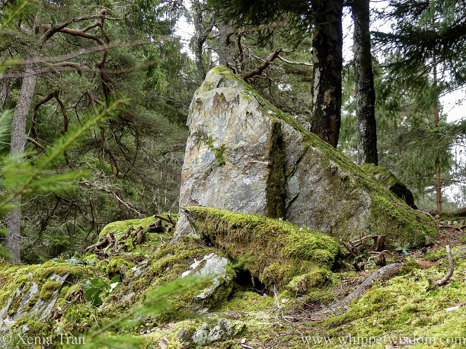 a large rock above a forest trail with moss growing on top